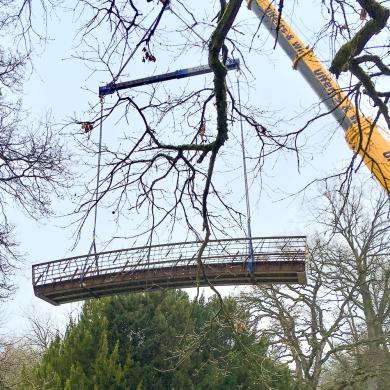 Branches Bridges